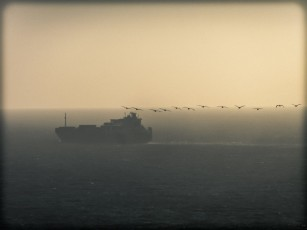 A Ship and Seabirds