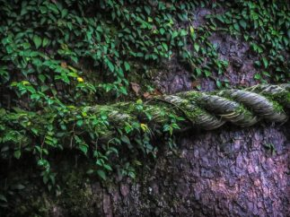 Tree and Rope
