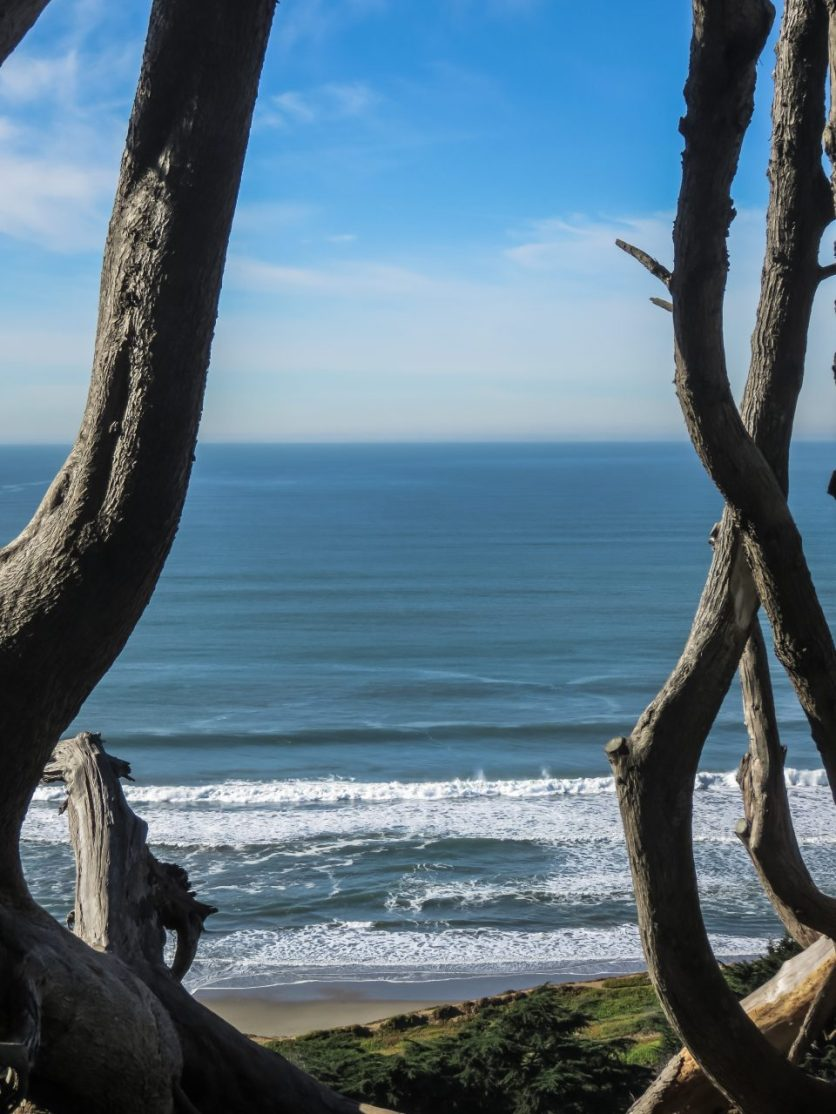 Ocean Through Trees